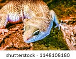 close up view of lizard  | Shutterstock . vector #1148108180