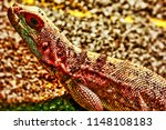 close up view of lizard  | Shutterstock . vector #1148108183
