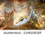 close up view of lizard  | Shutterstock . vector #1148108189