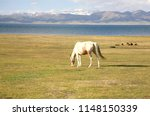 the horse  in a large meadow at ... | Shutterstock . vector #1148150339