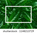 texture of green leaf.... | Shutterstock . vector #1148213729
