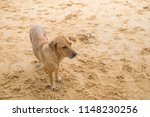 cute dog on the beach. | Shutterstock . vector #1148230256