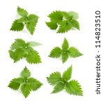 leaf of nettle on white... | Shutterstock . vector #114823510