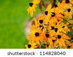 Fading Autumn Flowers