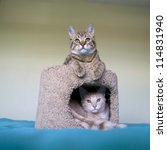 Stock photo small cat 114831940