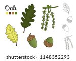 vector set of oak tree elements ... | Shutterstock .eps vector #1148352293