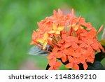 spike flower  orange  flower... | Shutterstock . vector #1148369210
