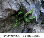 closeup of a specimen of ebony... | Shutterstock . vector #1148383583