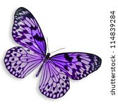 Purple Butterfly Flying...
