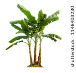 banana tree isolated with... | Shutterstock . vector #1148403230