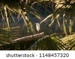 Great Egret White Bird Portrait ...