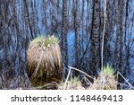 tussock in water with trees... | Shutterstock . vector #1148469413