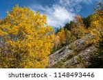 park autumn landscape with... | Shutterstock . vector #1148493446