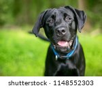 a black labrador retriever dog... | Shutterstock . vector #1148552303