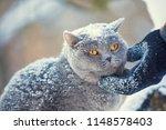 human hand petting cat's neck... | Shutterstock . vector #1148578403