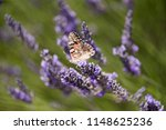 colorful butterfly resting on a ... | Shutterstock . vector #1148625236