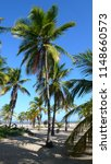 Stock photo early morning view of sandy beach at caribe isthmus with different sizes of coconut palm trees 1148660573
