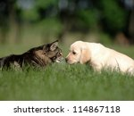 Stock photo cat and dog friendship 114867118