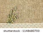 bunch of cut lavender flowers... | Shutterstock . vector #1148680703