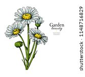 daisy flower drawing. vector... | Shutterstock .eps vector #1148716829