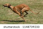 Stock photo greyhound is running in pursuit of a mechanical hare rabbit 1148739233