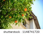 mandarin tree on the background ... | Shutterstock . vector #1148741720
