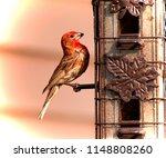 House Finch On Bird Feeder Red...