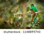 resplendent quetzal  savegre in ... | Shutterstock . vector #1148895743
