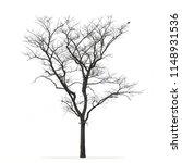 Leafless Tree Isolated White...