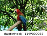 birds in nature zoo | Shutterstock . vector #1149000086