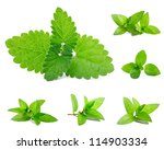 fresh mint isolated on white.... | Shutterstock . vector #114903334