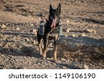 traveling with dogs | Shutterstock . vector #1149106190