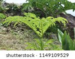 tropical plant on hilltop | Shutterstock . vector #1149109529