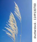 waver grass and sky | Shutterstock . vector #1149130700