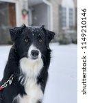 portrait of a border collie dog ... | Shutterstock . vector #1149210146