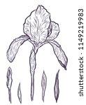 hand drawn iris set in vector... | Shutterstock .eps vector #1149219983