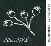 black board. red hawthorn...   Shutterstock .eps vector #1149273599