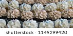 decorated cupcakes with tasty... | Shutterstock . vector #1149299420