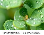 small aphid on leaf   selective ... | Shutterstock . vector #1149348503