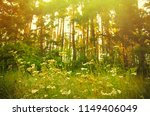 glade with flowers in pine... | Shutterstock . vector #1149406049
