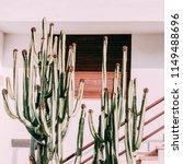 cactus lover. cactus minimal art | Shutterstock . vector #1149488696