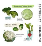 various cabbage set.  cabbage ... | Shutterstock .eps vector #1149501986