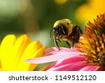 A Honey Bee On A Pink Flower...