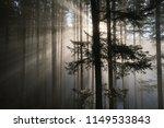 autumn landscape in the fir...   Shutterstock . vector #1149533843