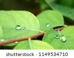 water drops on leaves | Shutterstock . vector #1149534710