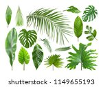 set of different tropical... | Shutterstock . vector #1149655193
