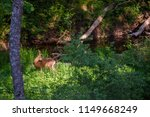 beautiful roe deer washing back ... | Shutterstock . vector #1149668249