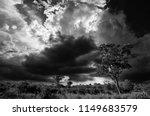 african landscape in the kruger ... | Shutterstock . vector #1149683579