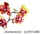 beautiful yellow with red spots ... | Shutterstock . vector #114971380