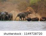 african elephant  loxodonta... | Shutterstock . vector #1149728720